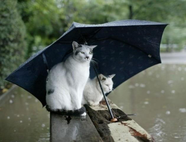 Якою буде погода у Луцьку та області 26 серпня