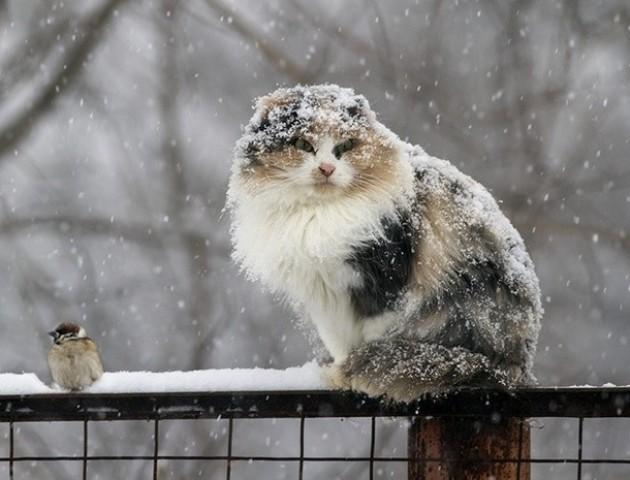 Якою буде погода у Луцьку та області 13 лютого