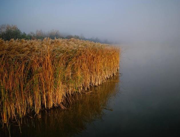 «Стеляться тумани»: ранкові світлини осені на Волині. ФОТО