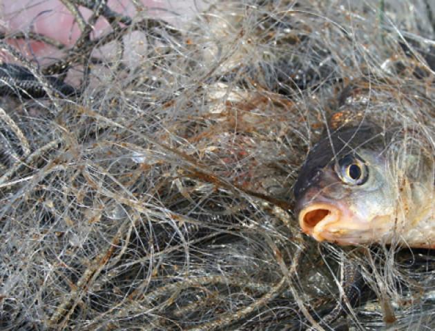 На Волині за місяць викрили півсотні рибалок-порушників