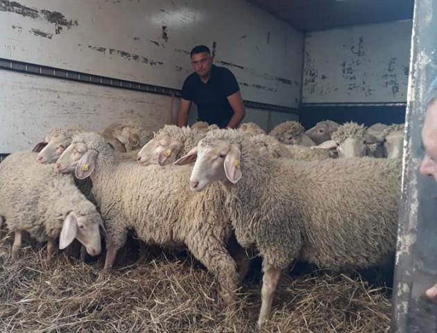 Фермер з Волині отримав 30 породистих овечок, які виграв у шоу «Громада на мільйон». ФОТО