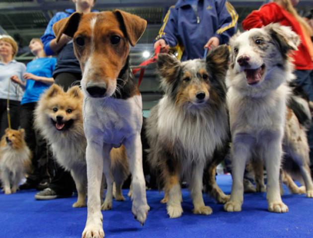 У Луцьку відбудеться виставка собак