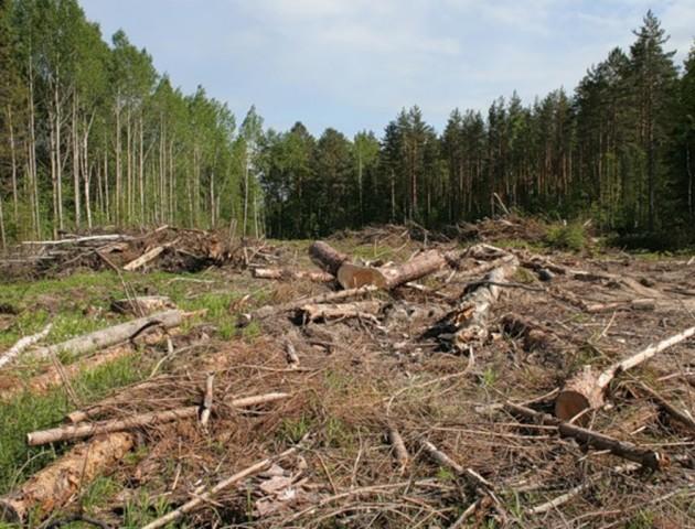 У селі на Камінь-Каширщині вирубку лісу контролює громада