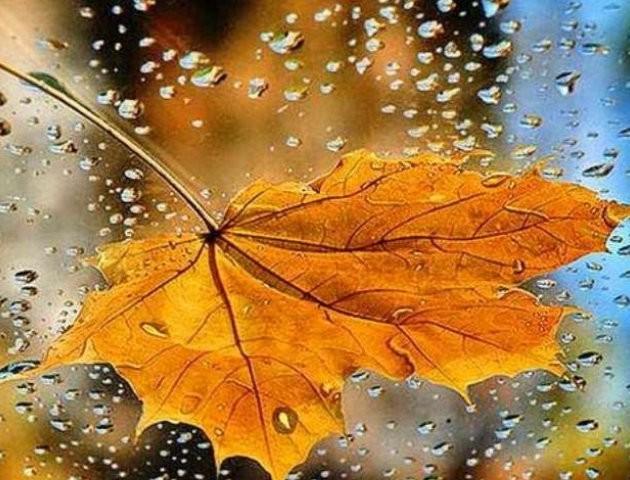 Якою буде погода у Луцьку та області 1 листопада