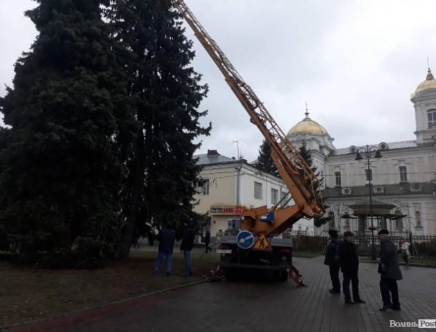 У  Луцьку розпочали  прикрашати головну ялинку міста. ФОТО