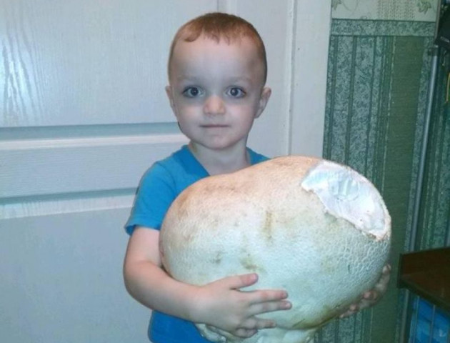 На Волині знайшли 4-кілограмового гриба. ФОТО