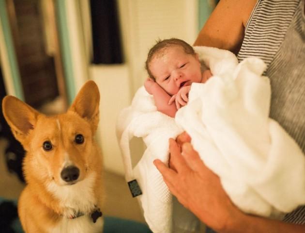 Собака підтримував жінку, яка народжувала вдома