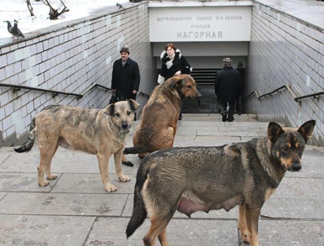 На Волині собаки напали на жінку з дитиною, - соцмережі