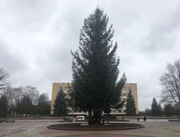У Нововолинську встановили новорічну ялинку. ФОТО
