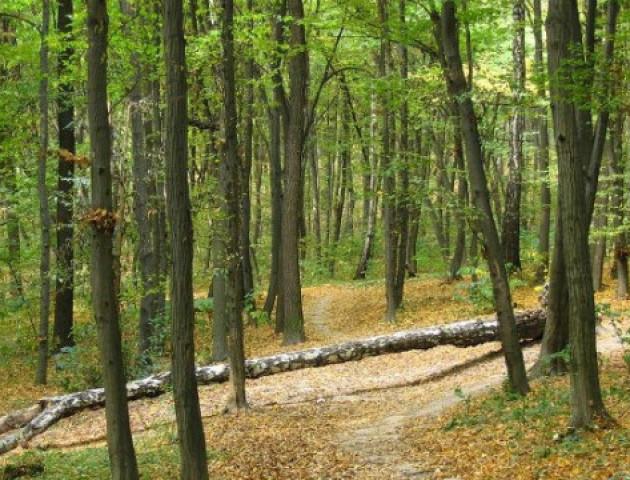 Ліси на Волині можуть зникнути через 11 років
