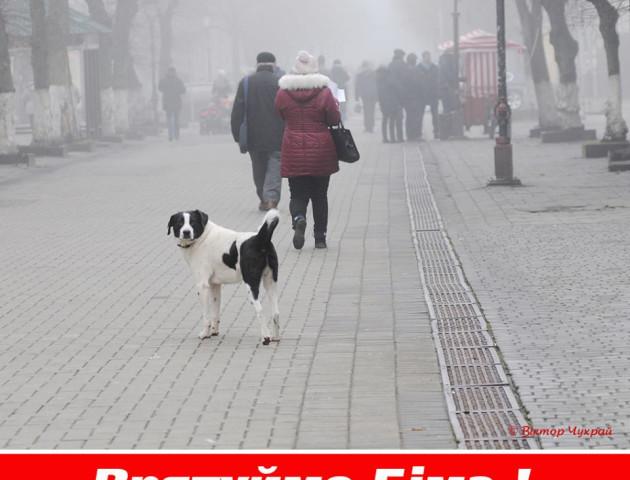 Небайдужі лучани просять «звільнити» пса Біма
