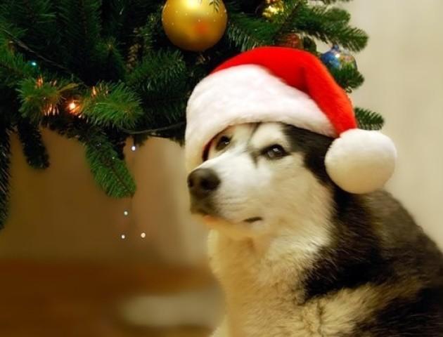 Дві собаки не давали господареві викинути новорічну ялинку. ВІДЕО