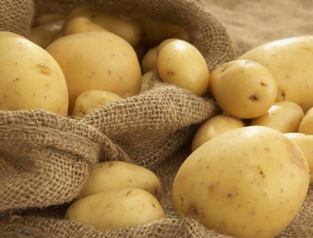 Волинські аграрії вирощуватимуть картоплю для чипсів
