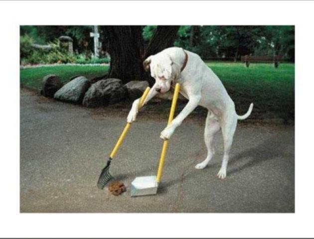 «Кому треба – хай прибирають»: деякі лучани відмовляються прибирати за своїми псами
