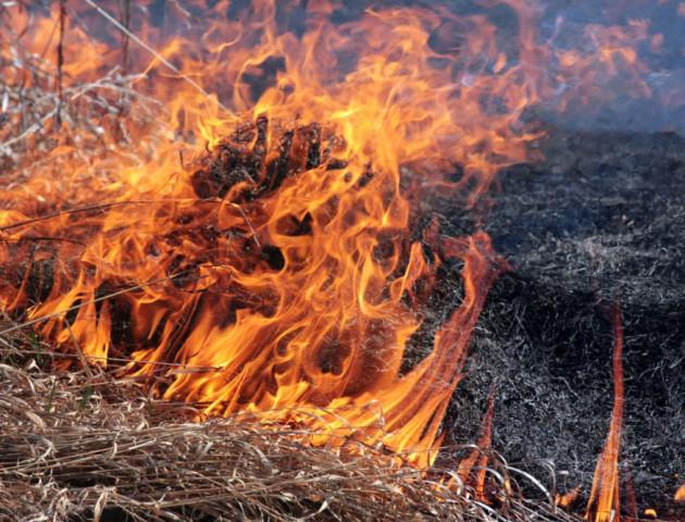 Волинян просять не застосовувати «дику практику» спалювання трави