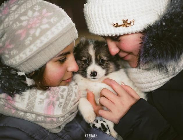Мокрі носики і сумні очі: зворушливі світлини жителів КП «Ласка». ФОТО