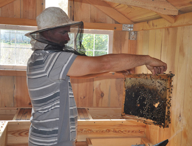 Пасічник з Волині спить на бджолах, гріє їх батареями і возить «кататися». ФОТО