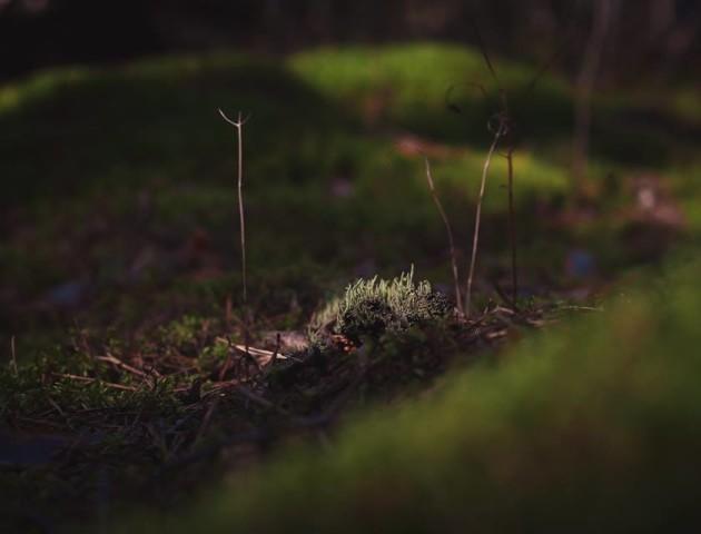 Ранковий ліс у перших променях сонця. ФОТО