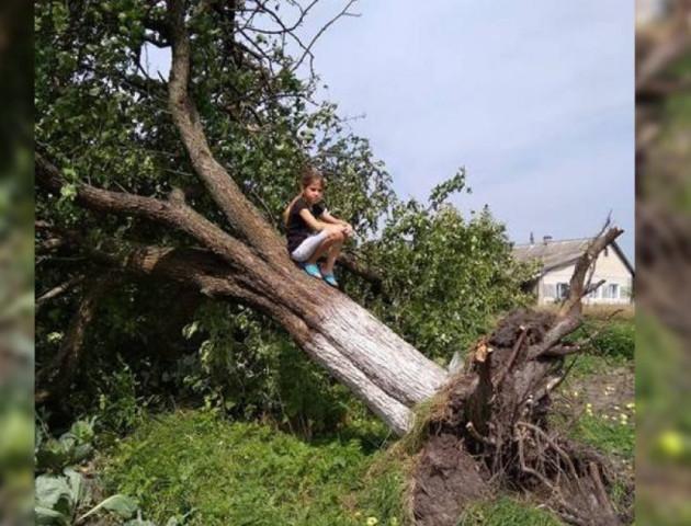 У селі на Волині вітер повиривав дерева з корінням. ФОТО