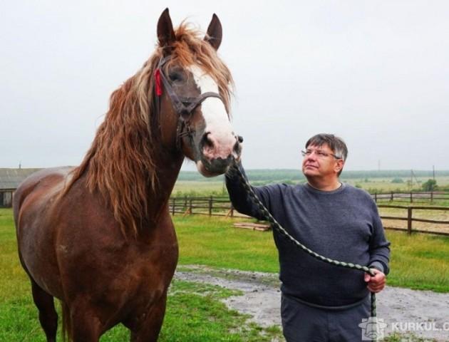 Волинські коні знялися у фільмі «Червоний-2»