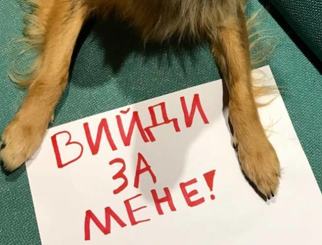 У Луцьку запрошують на марш за права тварин