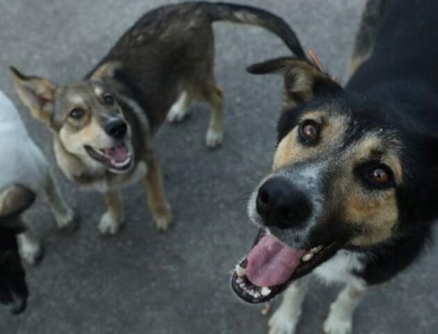 У Луцькому районі перевірять, чи відловлює собак Богдана Новарчук