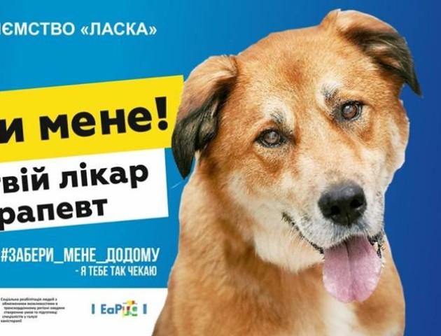 «Забери мене додому»: у луцькій «Ласці» запустили оригінальну рекламу. ФОТО
