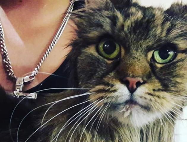 Поки старі господарі шукали, нові – ледь не вбили: зворушлива історія порятунку кота у Луцьку