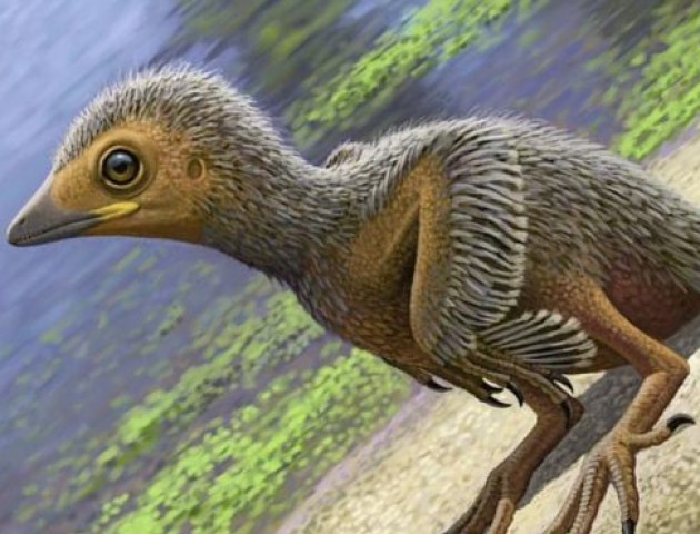 Вчені знайшли скелет пташеняти, яке жило 127 мільйонів років тому. ФОТО