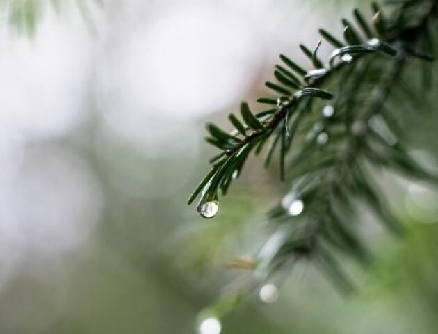 У Луцьку 29 грудня зафіксували температурний рекорд