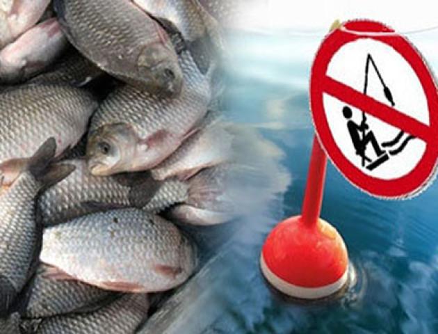Де на Волині заборонили ловити рибу