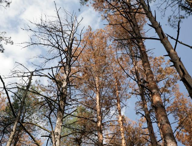 Волинь може втратити 7 тисяч гектарів лісів, - Кватирко