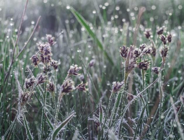 Мороз у повітрі: якою буде погода у Луцьку в неділю, 14 квітня