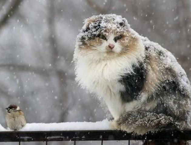 У понеділок, 14 січня, у Луцьку - дощ і ожеледиця