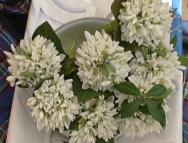 Волинян закликають не купувати квіти, занесені до Червоної книги