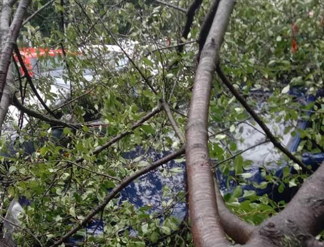 У Луцьку дерево впало на авто