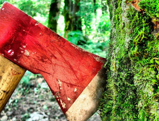 Указ президента допоможе зберегти ліси від незаконної вирубки - Бондар. ВІДЕО