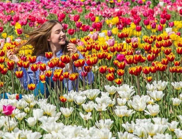 Показали неймовірні світлини «Волинської Голландії»