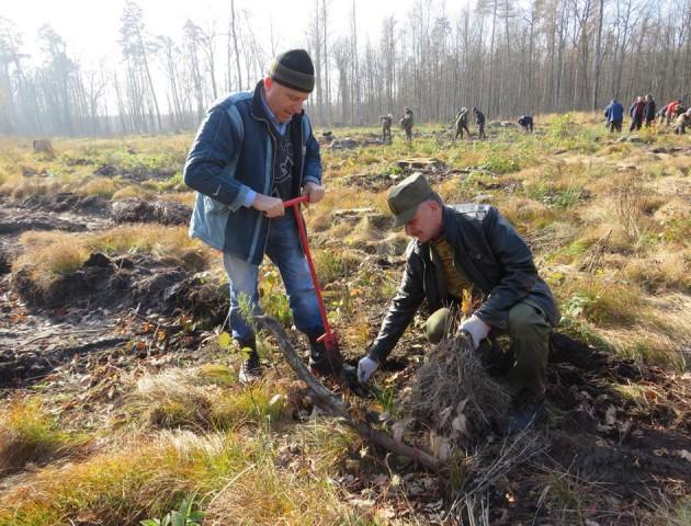 У «Цуманській пущі» висадили 5 тисяч саджанців дубів. ФОТО