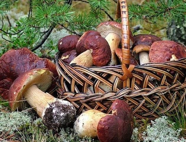 Двоє волинян отруїлося грибами