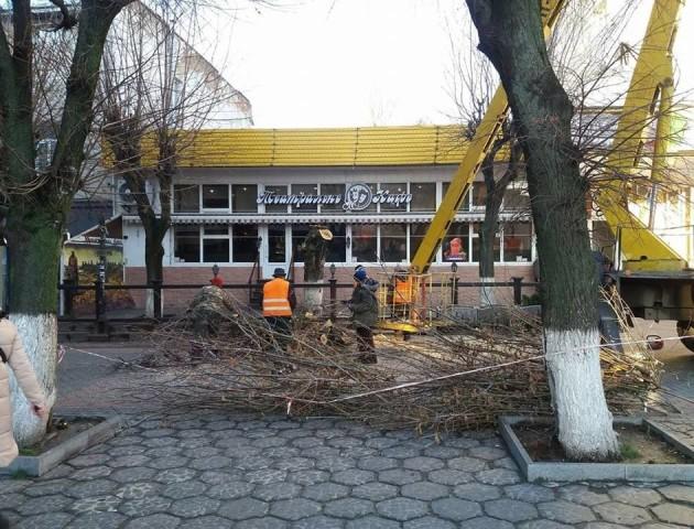 У Луцьку на центральній вулиці спиляли дерева