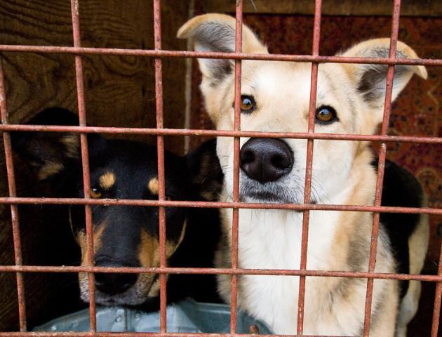 У Луцьку побільшало безпритульних псів