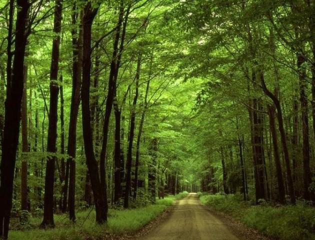 Волинянам нагадують, що лісові землі оподатковуються земельним податком