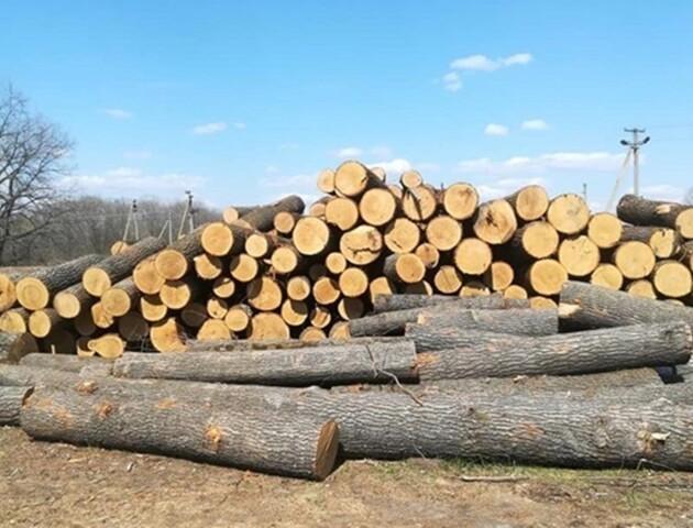 Ліс біля села Запруддя Камінь-Каширського району рубають законно, – поліція
