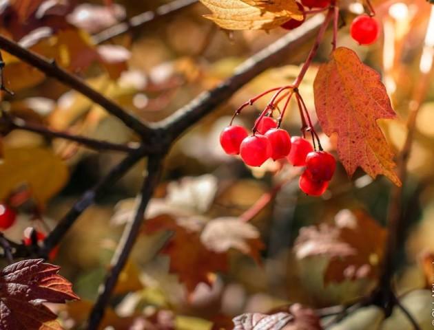 Деталі осені: фотограф з Луцька показав атмосферні світлини. ФОТО