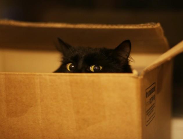 Чому коти люблять ховатись у коробки: відповідь вчених