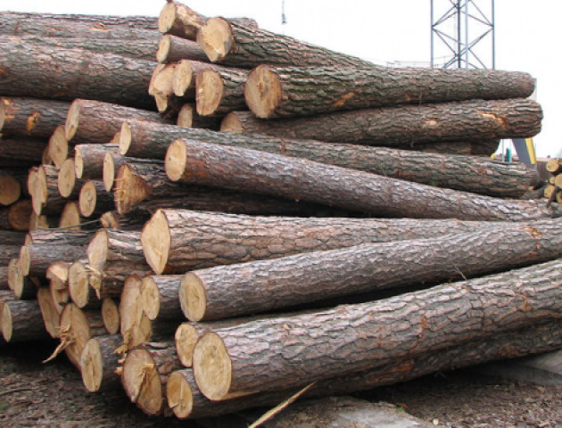 Волинський ліс крадуть чи не щодня. ВІДЕО