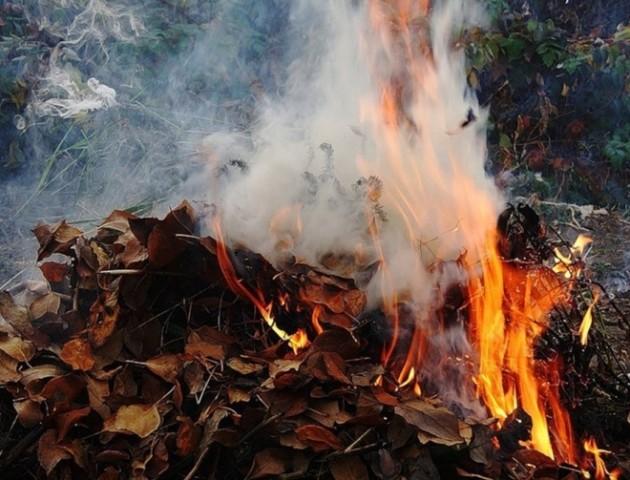 Розповіли, як карають лучан за спалювання сухого листя
