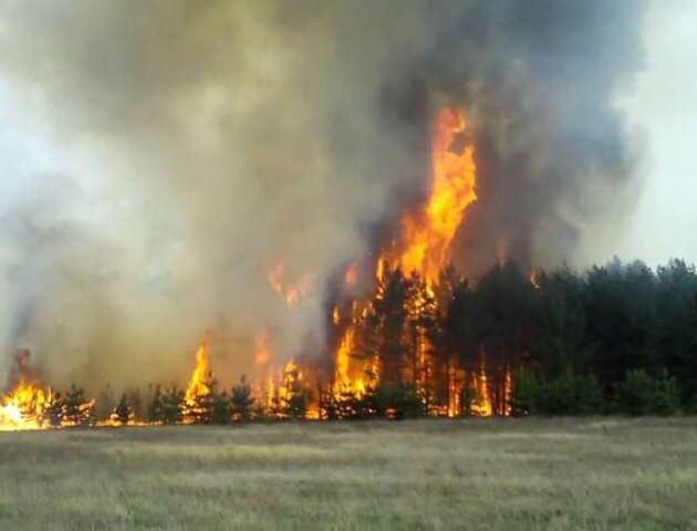 На Волині горять «неофіційні» ліси. Бо не мають господаря