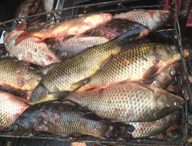 На Волині торгували «підозрілою» рибою
